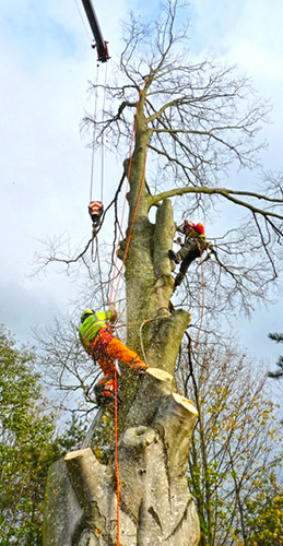 Commercial Treework
