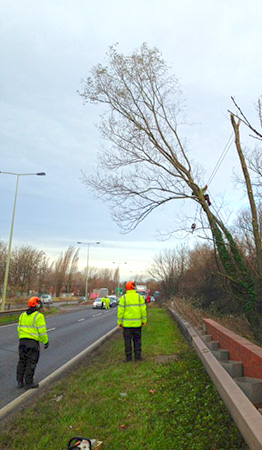 An emergency road closure by local police for the removal of this unsafe tree.